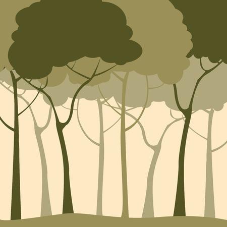 misty forest: Fondo de bosque verde