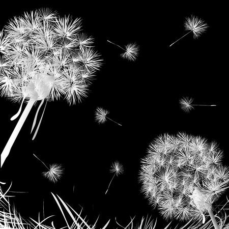 Dandelions and grass over dark background Stock Vector - 6855156