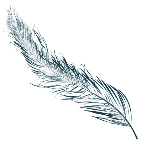 Blue feather, hand drawn object against white 스톡 사진