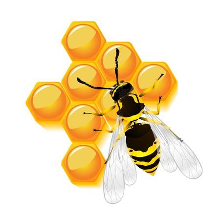 stinging: wasp and honeycomb, isolated object against white background