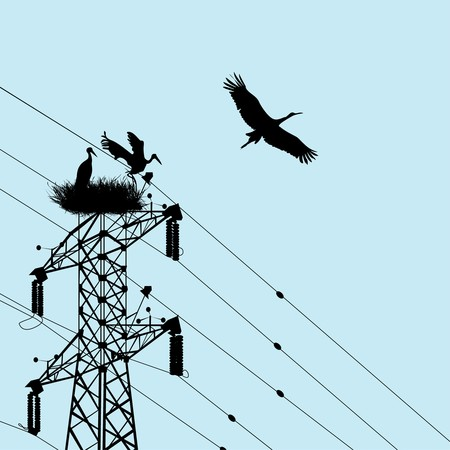 Storks silhouettes with electricity pole Vector