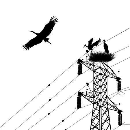 electricity pole: Storks silhouettes with electricity pole Illustration