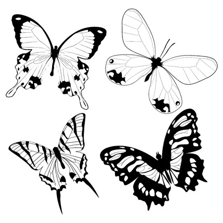 Butterflies in black and white Stock Vector - 8146647