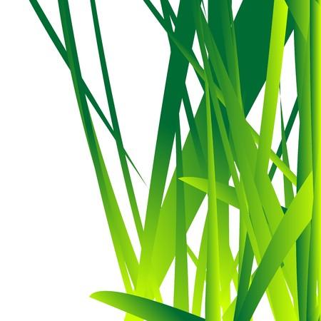 fresh grass over white background Stock Vector - 8146541