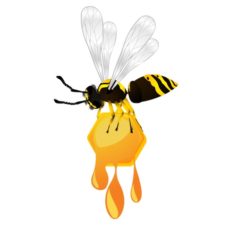 Wasp stealing a honeycomb, isolated object over white background Stock Photo - 8414358