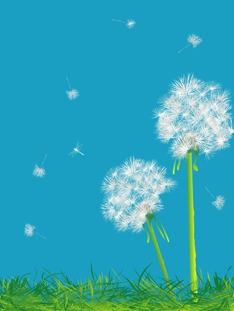 flimsy: Beautiful dandelions background, abstract art