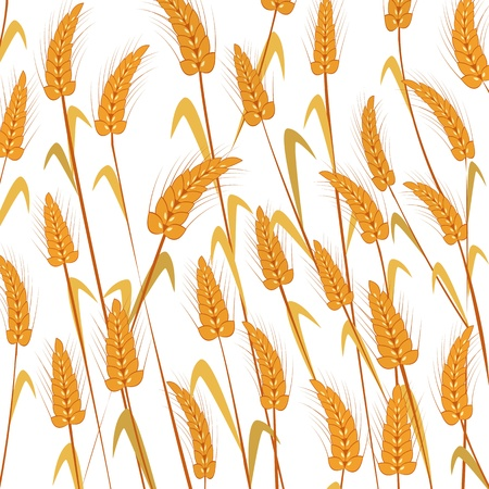 Wheat background. Isolated and grouped objects over white .