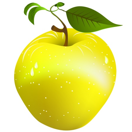 golden apple: Image shows a fresh, juicy golden apple over white background. Gradient mesh object. Illustration