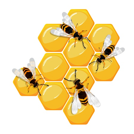 honeyed: Bees on a honeycomb, isolated objects over white Illustration