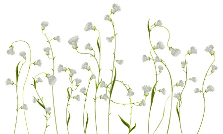 Realistic flower drawing against white background Stock Vector - 10135915