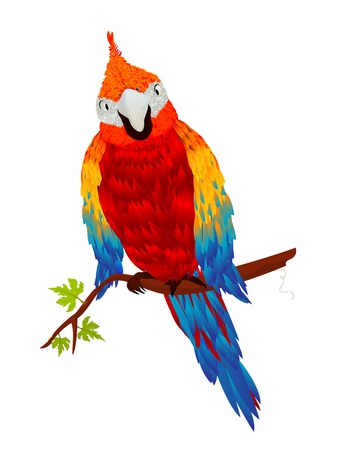 macaw: Starring parrot, isolated object over white background
