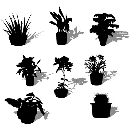 Potted plant silhouettes and reflection over white background Vector