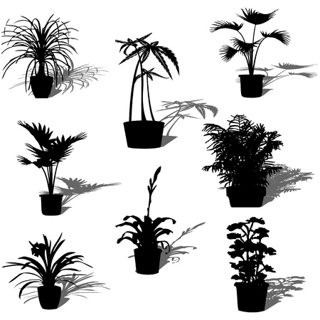 Potted plant silhouettes and reflection over white background
