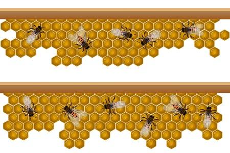 デザイン パターン、ハニカム上働く蜂とのシームレスな境界線の要素  イラスト・ベクター素材