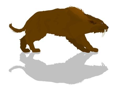 carnivora: Sabretooth cat silhouette and shadow   Cartoon illustration of