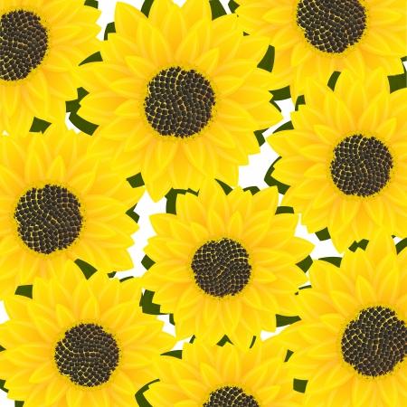 sunflower drawing: Decorative sunflower card, abstract art illustration