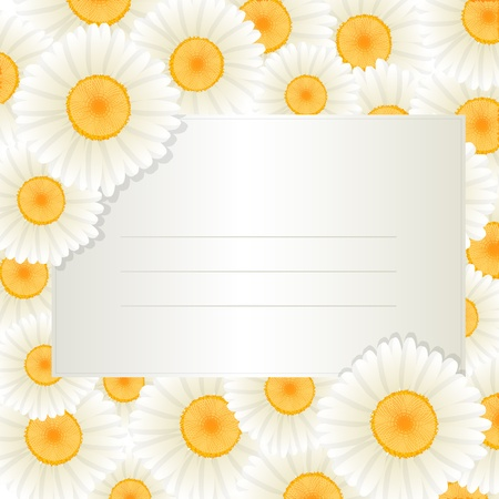 oxeye: Decorative greeting text card with oxeye daisy frame