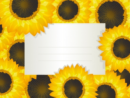 Illustration of a empty invitation card over a sunflower bed Stock Vector - 14041117