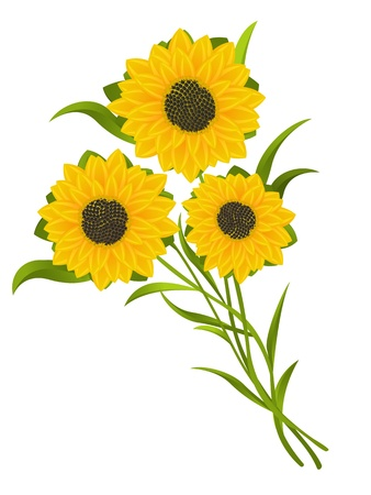 Sunflowers illustration, isolated and grouped objects over white background