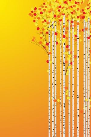 白樺の森秋の背景、テキストのための部屋の装飾的なカード