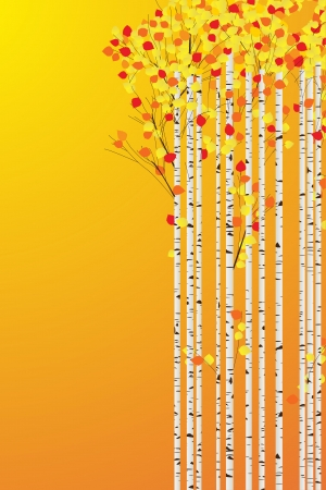 Birch forest autumn background, decorative card with room for text Vector