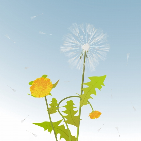flimsy: Decorative background card with dandelions stems, flowers and leaves