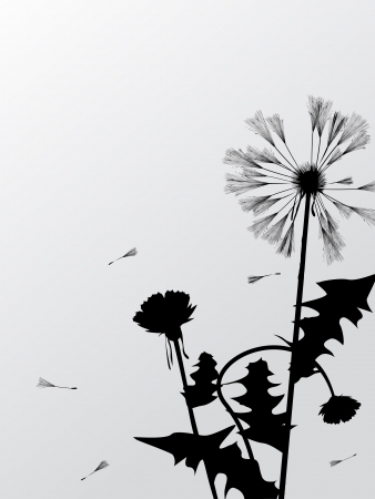 Decorative floral card with dandelion silhouettes and room for text Vector
