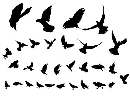 Detailed pigeon bird silhouettes over white background