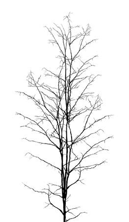 albero secco: Foglie silhouette albero secco su sfondo bianco