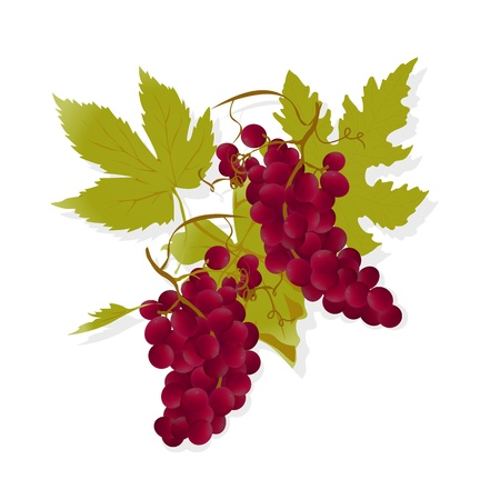 vine country: Realistic red grapes and leafs, gradient mesh illustration
