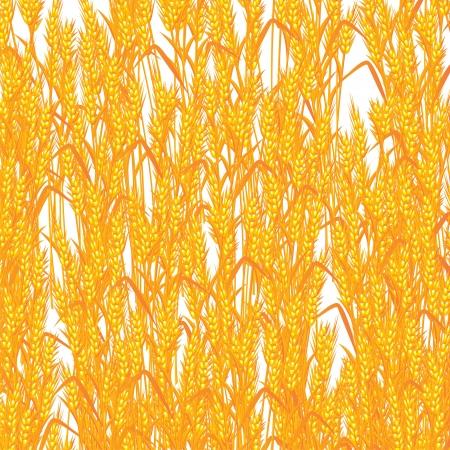 Golden wheat background, abstract art  Stock Vector - 16188083