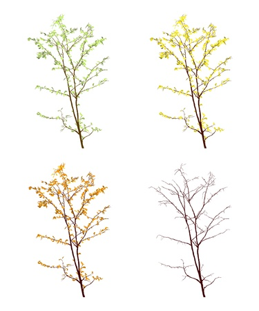 Four seasons view of a tree on white background Stock Vector - 16530240