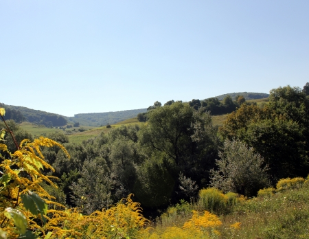 Summer background landscape with flowers and forest Stock Photo - 16796481