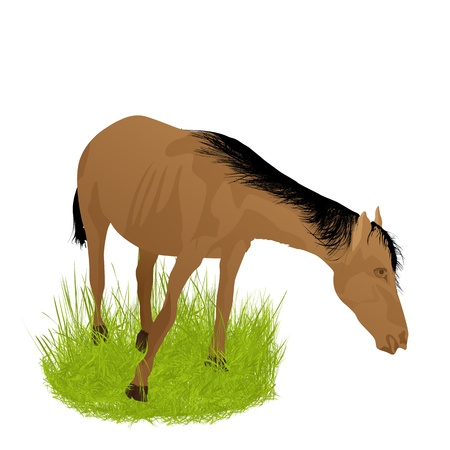 Illustration of a horse and grass, isolated objects on white background. Stock Vector - 17230679