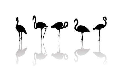 Outline drawing of flamingo birds and relfection Vector