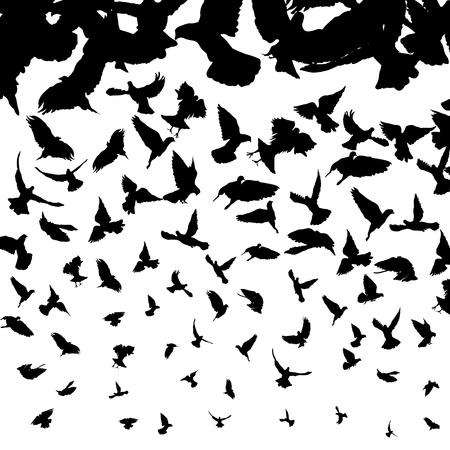 zwerm vogels: Achtergrond illustratie met vliegende vogel silhouetten Stock Illustratie