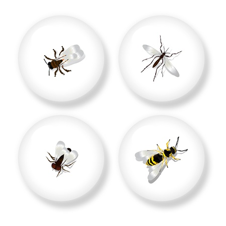 four objects: A set of four buttons with detailed drawing of flying insects  Isolated objects on white background