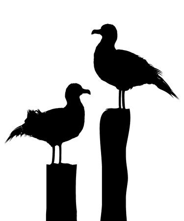 gaviota: Siluetas de dos gaviotas de pie en el muelle Ioslated objetos contra el fondo blanco