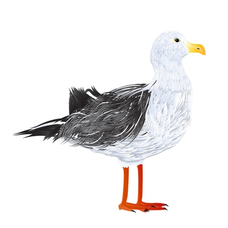 Illustration of a standing seagull Illustration