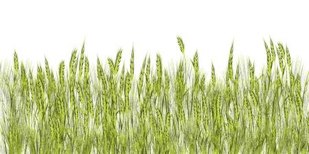 Green grass illustration against white background Vettoriali