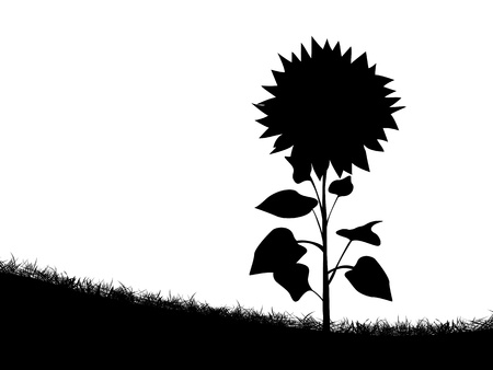 sunflower field: Silhouette of a sunflower on the field of grass Illustration