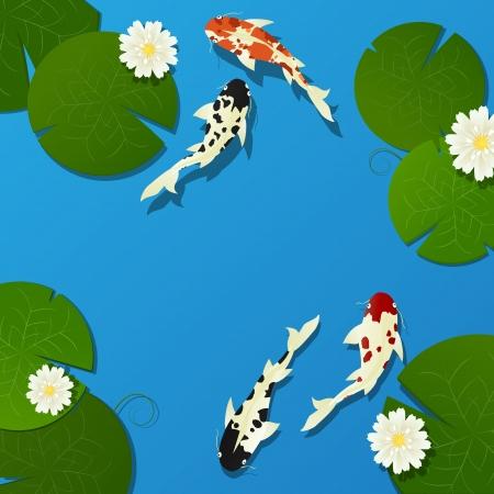 Koi fish and lotus leaves, flower