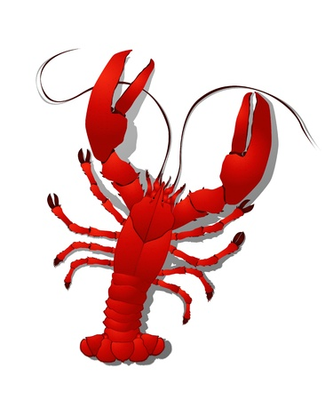 expensive food: Red lobster detailed illustration, isolated objects on white background Illustration