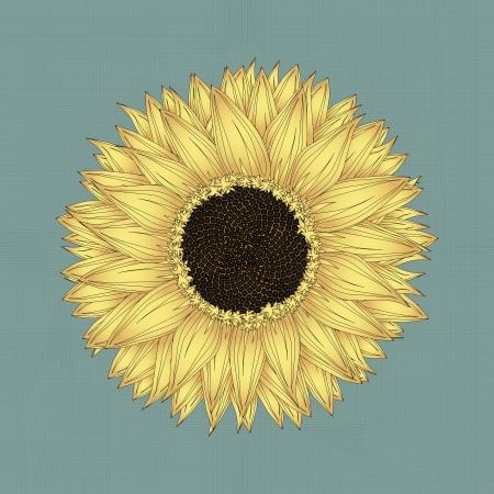 Sunflower drawing, grunge background sketch