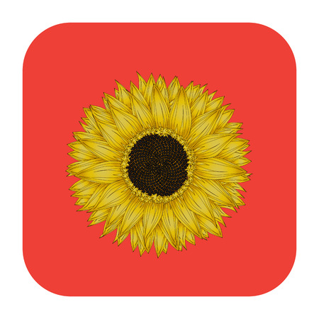 Sunflower icon, isolated object over white background Vector