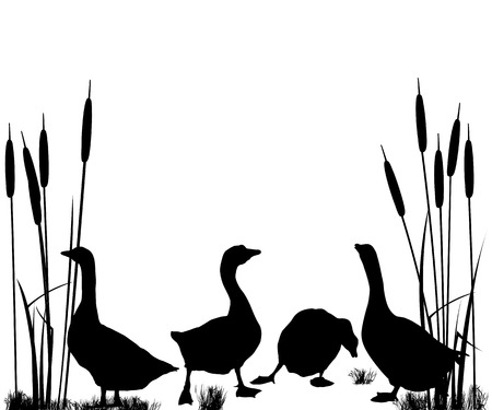 webbed: Goose and ducks silhouettes over white background