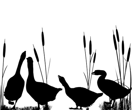 webbed: Goose and reeds silhouettes over white background