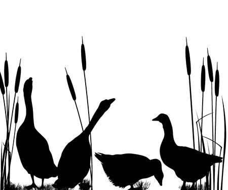 duck feet: Goose silhouettes over white background