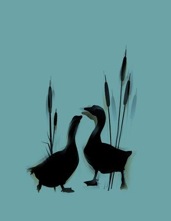 duck feet: Romantic wildlife background with wild gooses couple