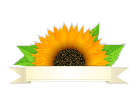 Sunflower and banner against white background